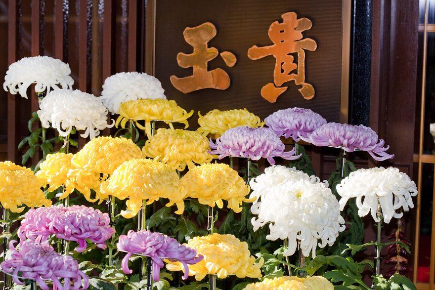 日本の五節句 重陽の節句 - 山菜料理 玉貴