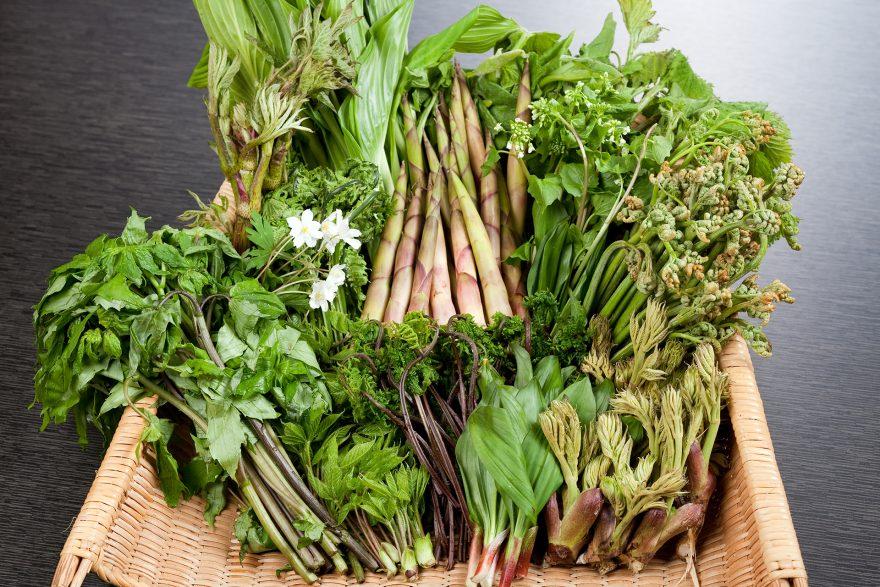 玉貴の四季 - 山笑う頃|山菜料理 玉貴